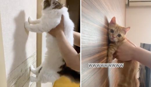 【動画】賢い犬・猫は壁に手をつくらしいが可愛い!TikTokで話題に!